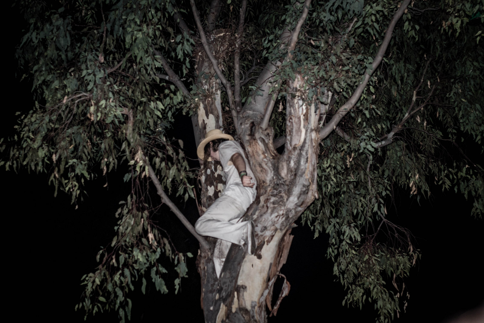 Grimes_Fan_in_Tree